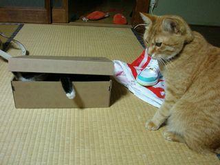 ネコたち 015