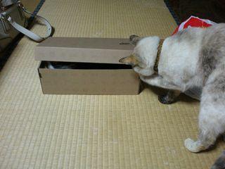 ネコたち 016