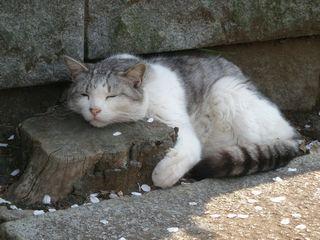 猫たち 011