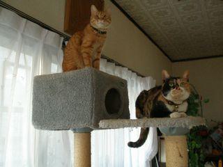 ネコたち 003