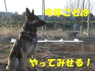CIMG2012_sh02.jpg