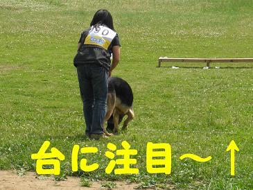 CIMG3293_sh01.jpg