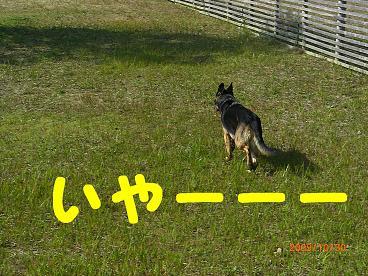 CIMG5176.jpg