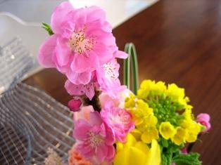 梅&菜の花1