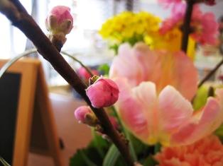 梅&菜の花2