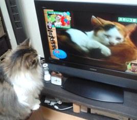 テレビを見る1