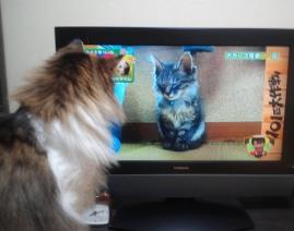 テレビを見る2