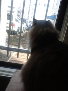 野良猫とご対面2