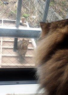 野良猫とご対面5
