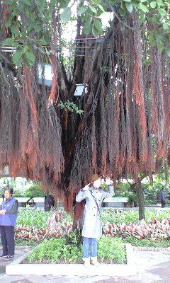 中国 公演 バオバブの木ゆうま