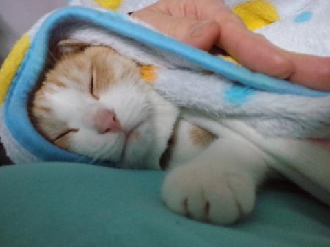 桃ちゃん抱っこ寝る