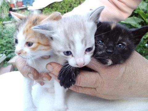 猫ちゃん三匹