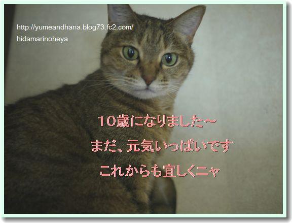 モカ10歳1204105