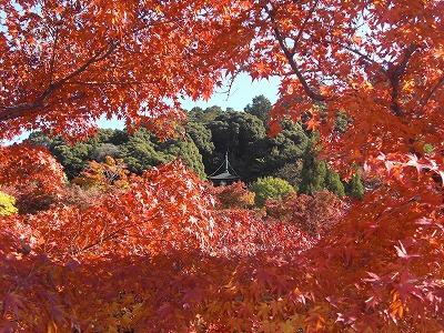 京都10秋 282