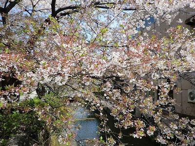 京都11 026