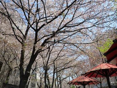 京都11 024