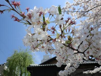 京都11 037