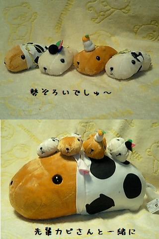 ちこちゃん日記19★カピバラ丼??★-9