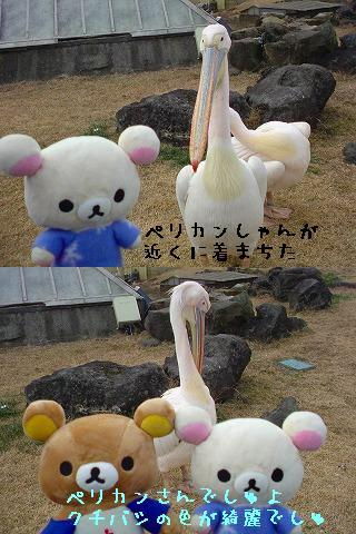ちこちゃん日記31★伊豆シャボテン公園レポファイナル★-3