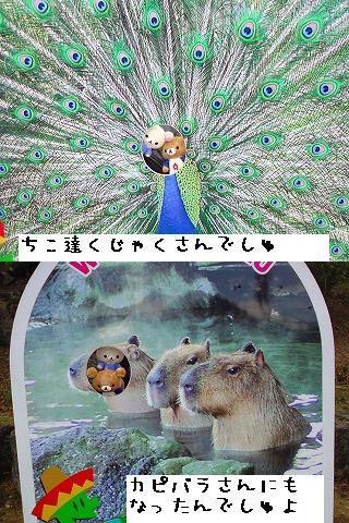 ちこちゃん日記31★伊豆シャボテン公園レポファイナル★-4