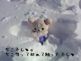 ちこちゃん日記特別編★雪って冷たいね★-1