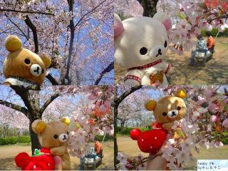 ちこちゃん日記★特別編★お花見に行って来ました-2