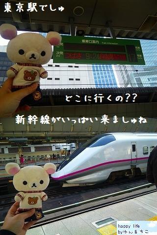 ちこちゃん日記★特別編★どこに行くのかな~??-1