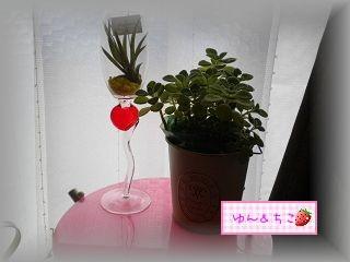 ちこちゃん日記★92★観葉植物始めました-2
