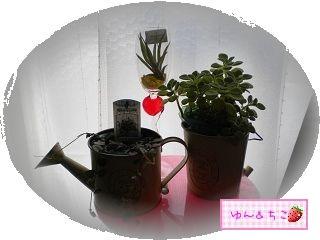 ちこちゃん日記★92★観葉植物始めました-3