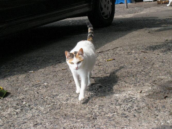 IMG_6134猫