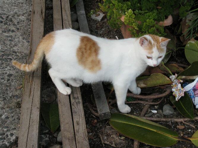 IMG_6120猫