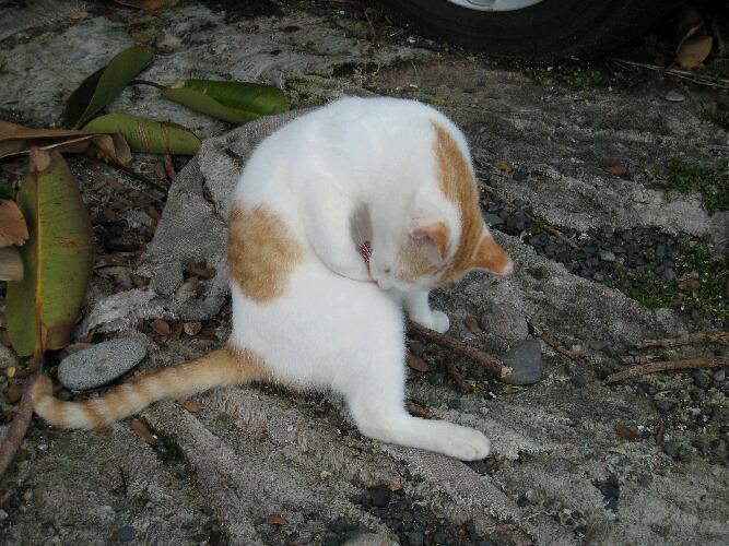 IMG_6122猫