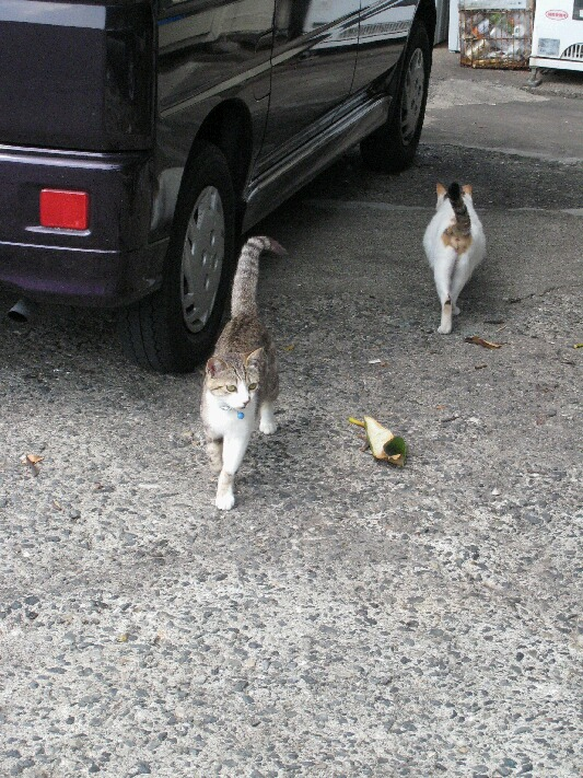 IMG_6138猫