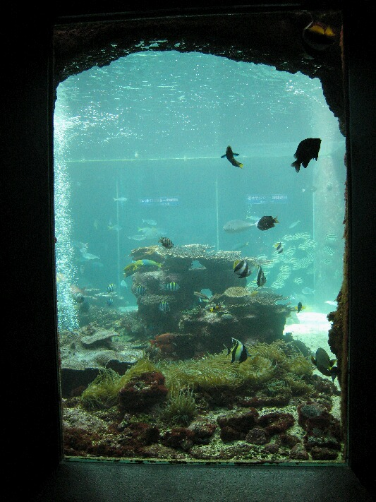 IMG_6490水族館