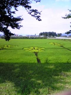 田んぼに咲いた花