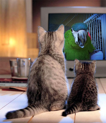 猫に狙われる