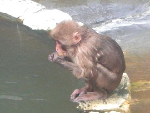 11年函館 湯の川植物園5