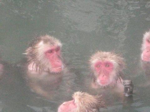11年函館 湯の川植物園4