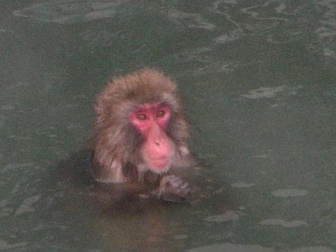 11年函館 湯の川植物園8