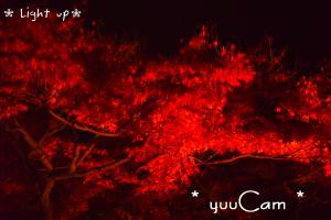 081126Lightup04_convert_20081127204004.jpg