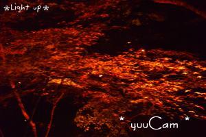 081126Lightup05_convert_20081127204056.jpg