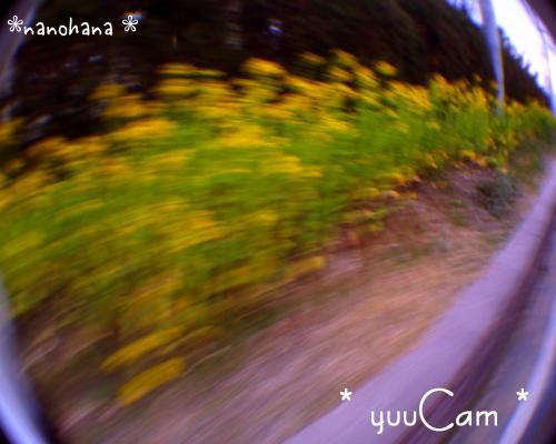 090216nanohana01_convert_20090216201830.jpg