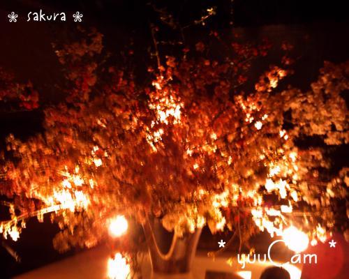 090319sakura_convert_20090404063818.jpg