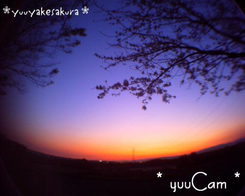 090410yuuyakesakura_convert_20090412082914.jpg