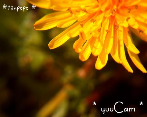 090419tanpopo01_convert_20090421181951.jpg