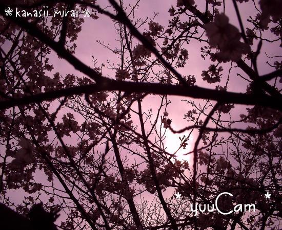 20100402sakura01_convert_20100622191313.jpg