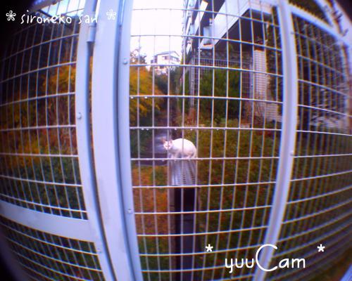 sironeko01_convert_20081222201948.jpg