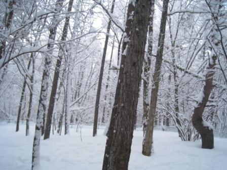 ランも雪深い