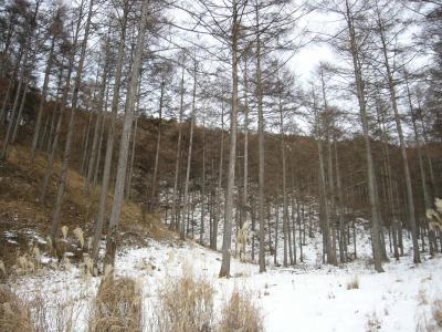 OとKの奥の森林1_convert_20120123005706