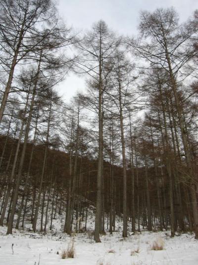 OとKの奥の森林2_convert_20120123005824